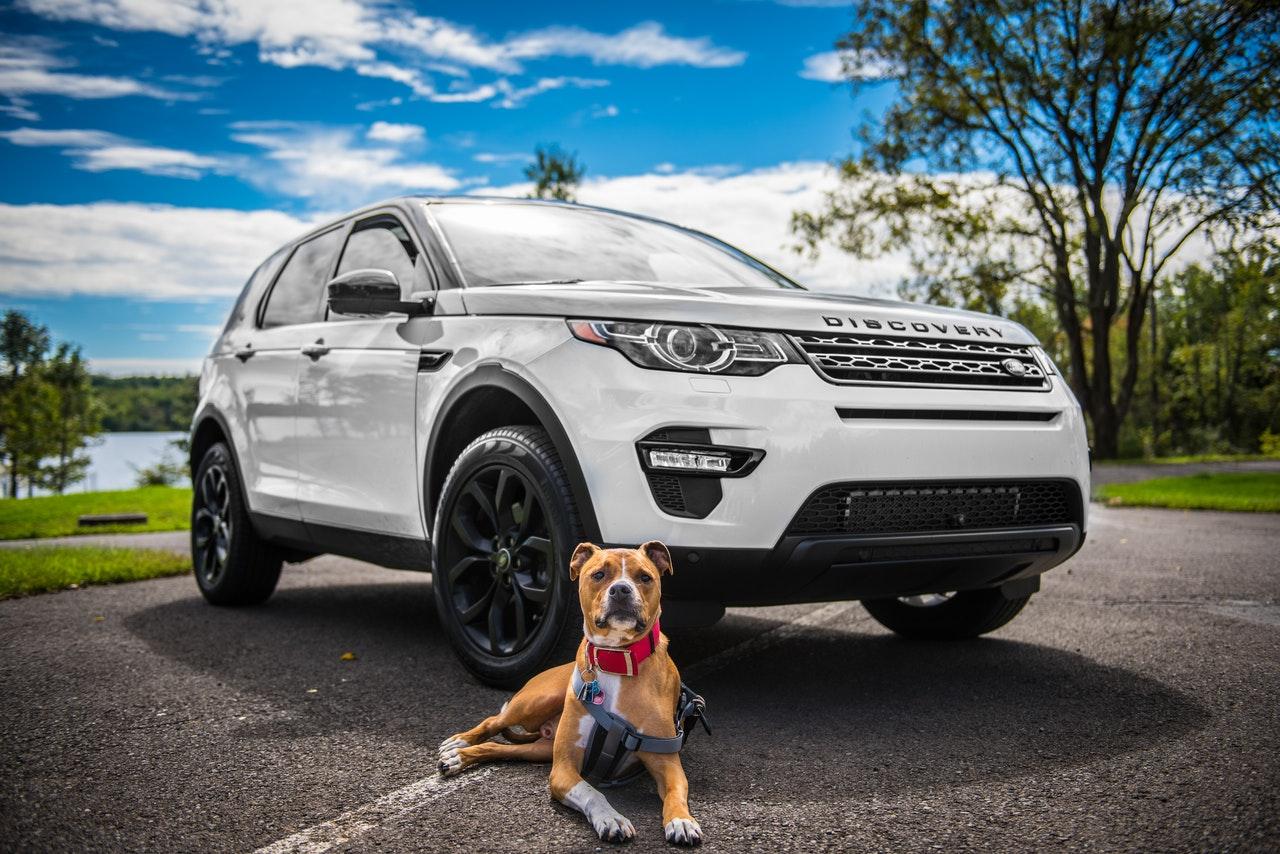 hund och bil