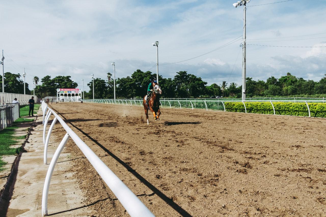 häst som springer
